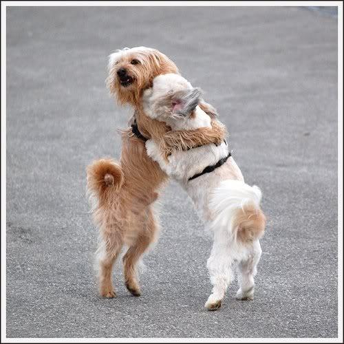 psi valentinovo