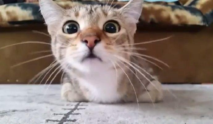 Mačka gleda horor film!