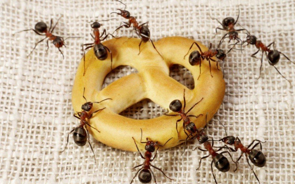 Rešite se mrava u kući zauvek: Noćnoj mori svih domaćica došao je kraj!