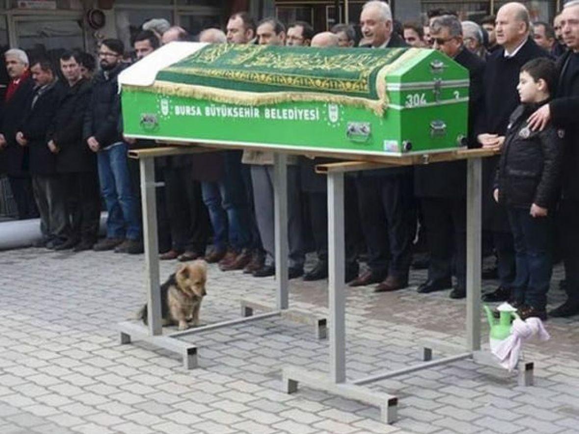 Tuga do neba: Očajni pas ispratio vlasnika na večni počinak! (FOTO)