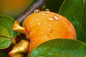 Kaki - japanska jabuka - zašto je zdrava i kako je jesti!