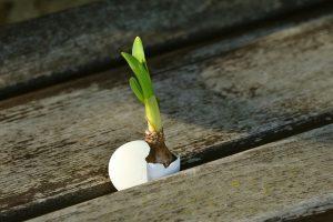 Biljne klice - moćni izvori hranjivih sastojaka!