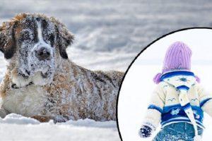 Pas spasio dvogodišnjeg dečaka od sigurne smrti na -21!