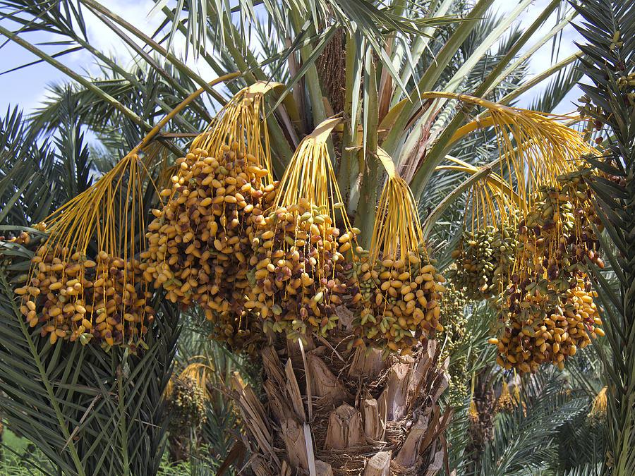 Ovo voće je NAJZDRAVIJE na planeti