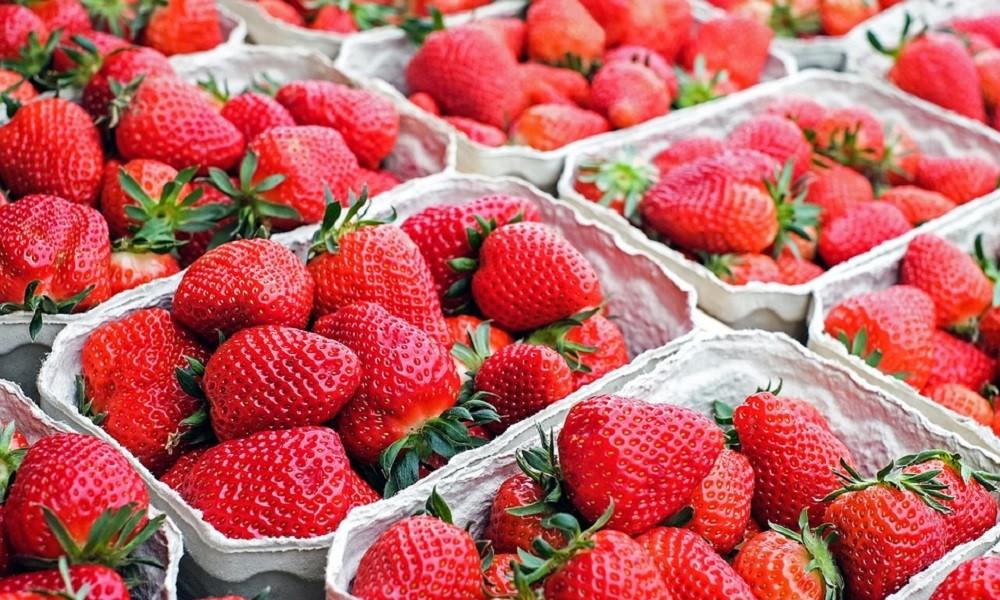 Jedite jagode pet dana, a kilogrami će sami nestati!