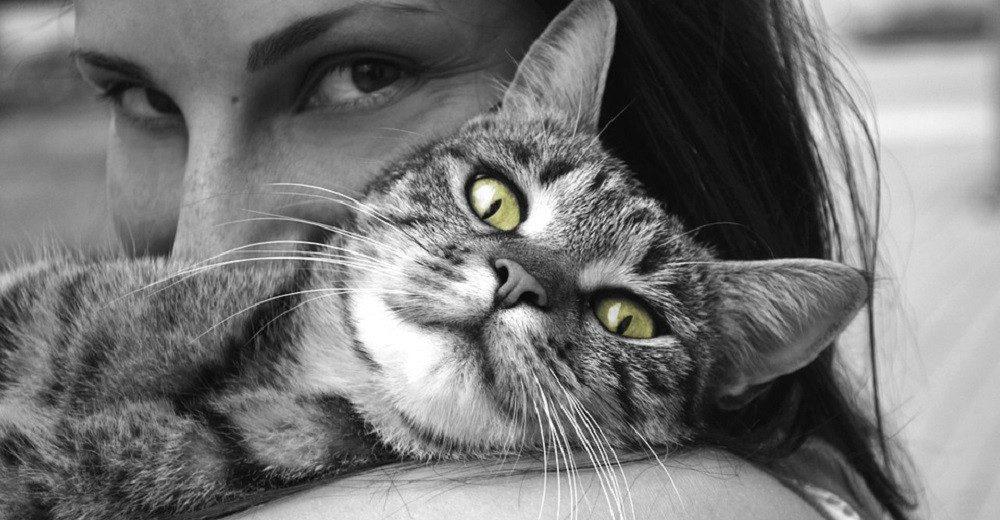 MAČKA JE ČUVAR VAŠEG ZDRAVLJA: koje bolesti mačka leči a koje može da oseti