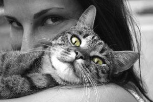 Naučnici pronašli vakcinu protiv alergije na mačke!