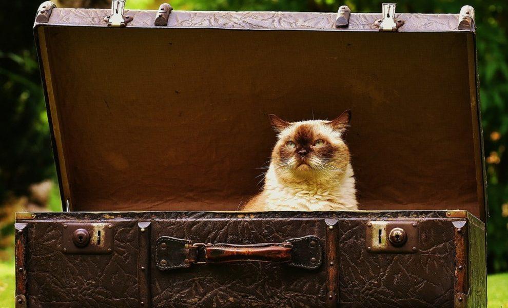 Konačno poznat razlog: Zašto mačke obožavaju kutije?