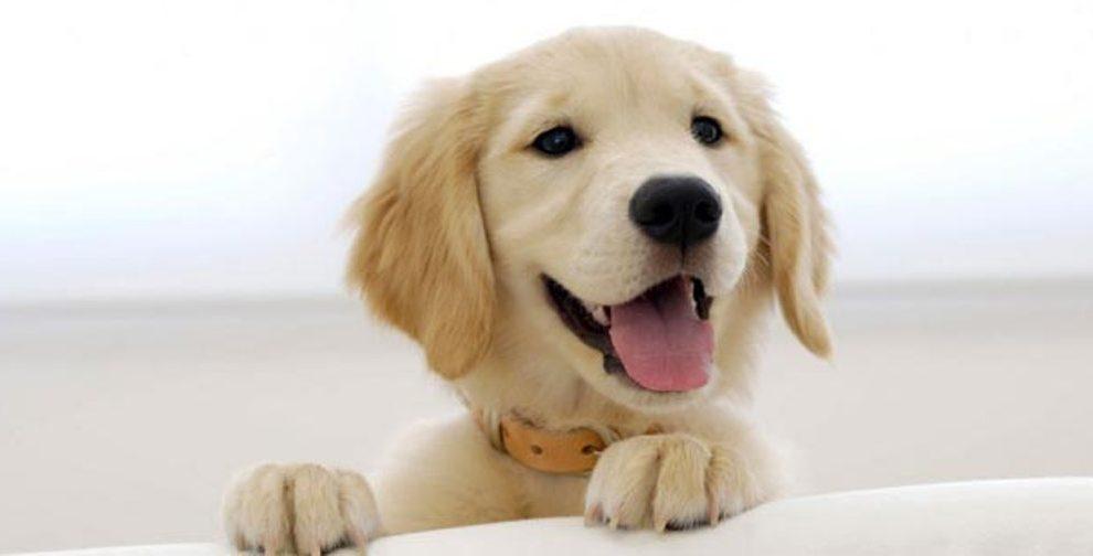 Zašto volimo pse i kako nas oni menjaju!