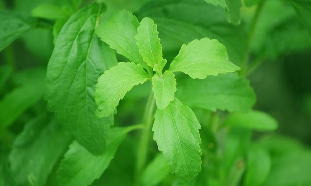 Ovo je biljka koja že vam pomoći da prestanete pušiti!