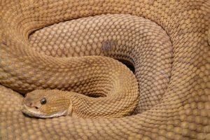 Mačak,kako bi spasio decu, ugrizima usmrtio zmiju pa uginuo...
