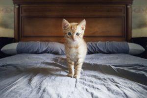 Zašto ne treba spavati sa mačkom u krevetu?
