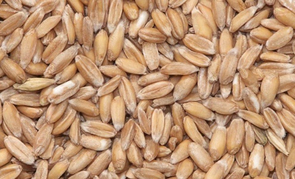 Ovo je jedina žitarica koja sadrži sve što je potrebno, prirodna i nije štetna!