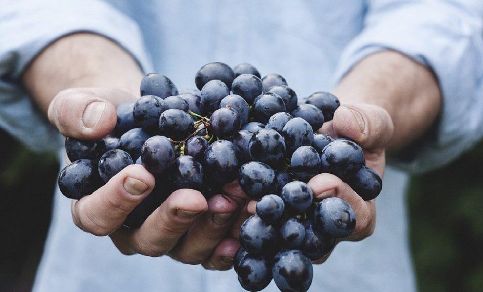 Hrana kao lek: Ukoliko jedete grožđe mesec dana ove neverovatne promene će se dogoditi organizmu!