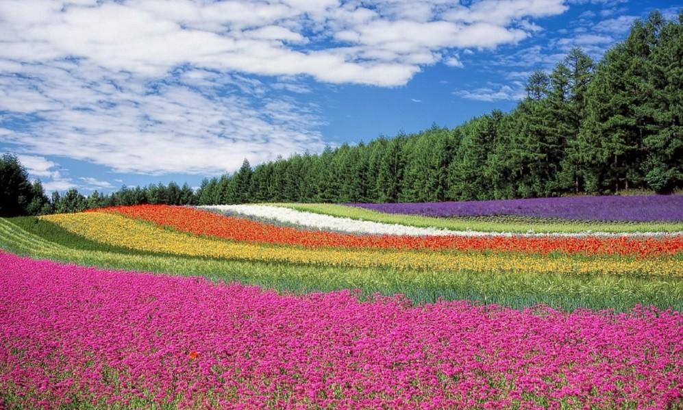 Saznajte kakvu tajnu poruku nosi vaše omiljeno cveće!