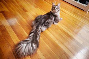 Dugorepa mačka i stari bodibilder u novoj Ginisovoj knjizi rekorda