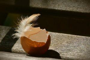 6 neverovatnih načina da iskoristite ljuske jajeta!