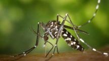 U kojoj zemlji nema komaraca?