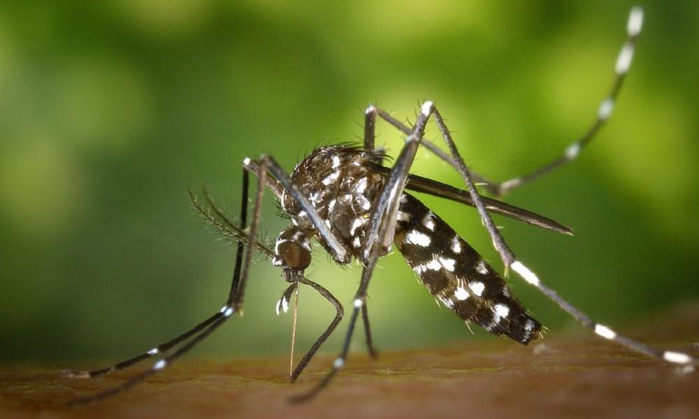 Ovu MIRISNU TEČNOST komarci ne podnose! Oteraćete ih za tren!