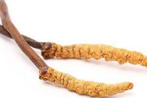 Kordiceps pečurke - mogu li biti zaslužne za dugovečnost?