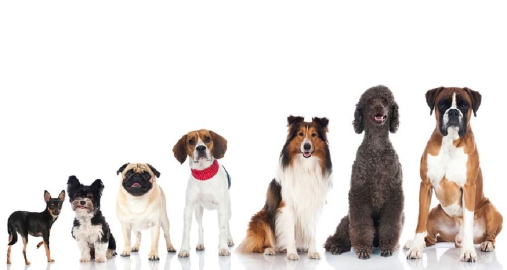 Ovo su najpametniji psi!