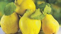 Otkrijte zašto su dunje tako zdrave + recepti!