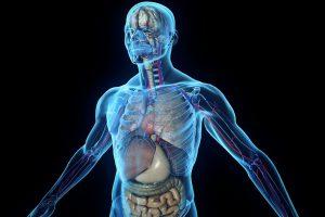 Bez ovih sedam organa možete da živite!