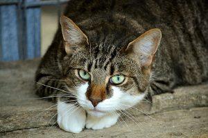 Video snimci s mačkama smanjuju produktivnost na poslu?