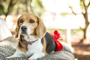 Š9 naučno potvrđenih prednosti zbog koji bi trebalo da imate psa pored sebe