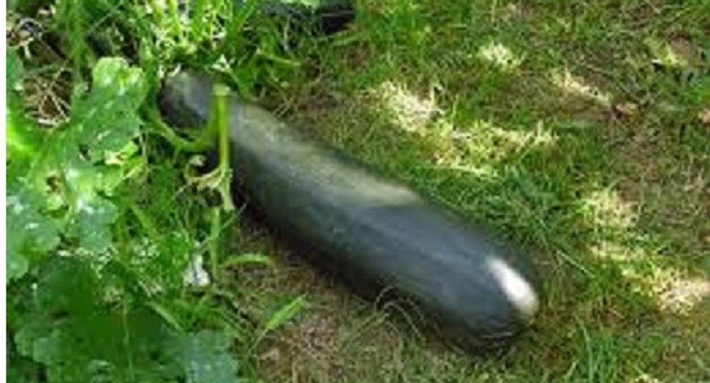 Nakon dojave policija u Nemačkoj umesto bombe zatekla tikvicu