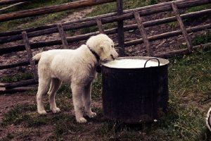 Evo šta svom psu nikako ne smete dati da jede!