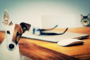 Nauka dokazala: Psi su pametniji od mačaka!