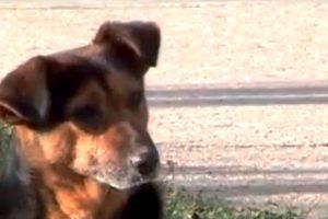 Neverovatna priča o ljubavi psa prema čoveku!