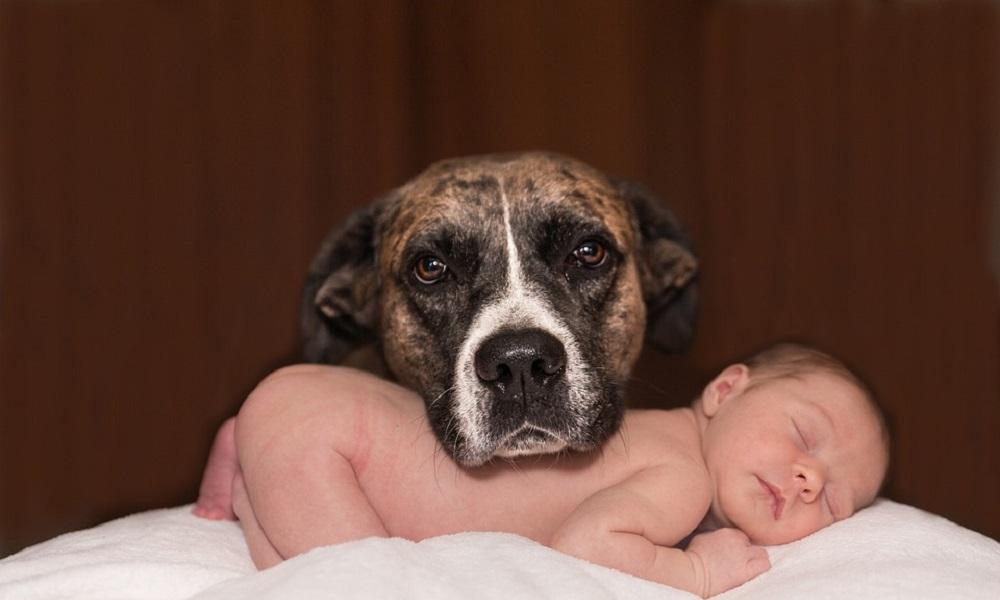 Slatke životinje i bebe na društvenim mrežama povećavaju našu brižnost!