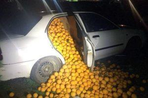 Policija u tri automobila pronašla čak četiri tone ukradenih pomorandži