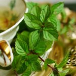Menta – dobra drugarica vašeg zdravlja i kuhinje!