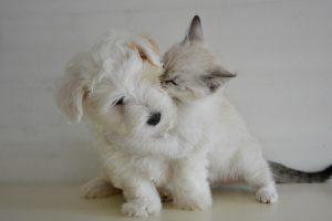 Da li su srećniji vlasnici pasa ili mačaka?