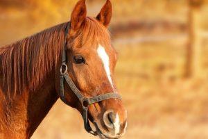 Baka u dvorištu zatekla konja koga je onlajn naručila unuka
