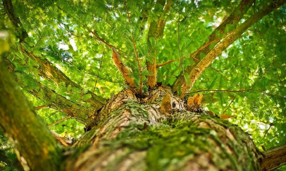 """Evo gde je nastalo čuveno """"Pu, pu, da kucnem o drvo"""".."""