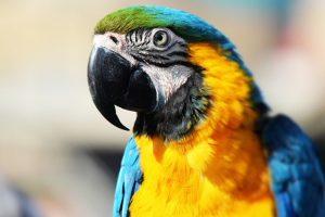 Svadja u porodici: Nemac se prepirao s papagajem