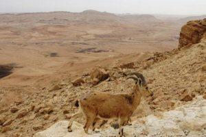 Izrael privlači turiste pustinjom
