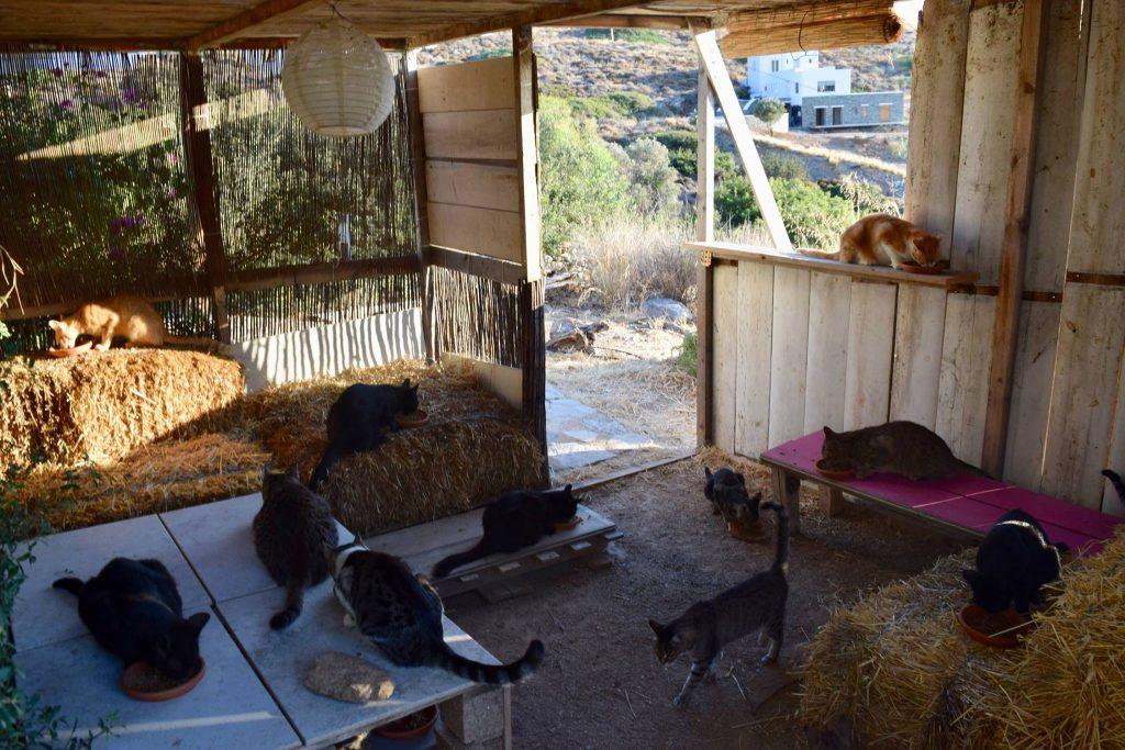 """Naime, utočište """"God's Little People Cat Rescue"""" traži osoba koja će im pomoći oko čuvanja čak 55 mačaka. Ovaj posao nudi se na grčkom ostrvu Siros, a pored druženja i maženja sa krznenim životinjama, zaposleni će dobiti potpuno plaćeni boravak, privatnu baštu a primaće i platu. Par koji je do sada vodio svetilište i brinuo o mačkama rešio je da nastavi dalje i ponudi svoj posao nekome drugom, piše Dejli mejl."""
