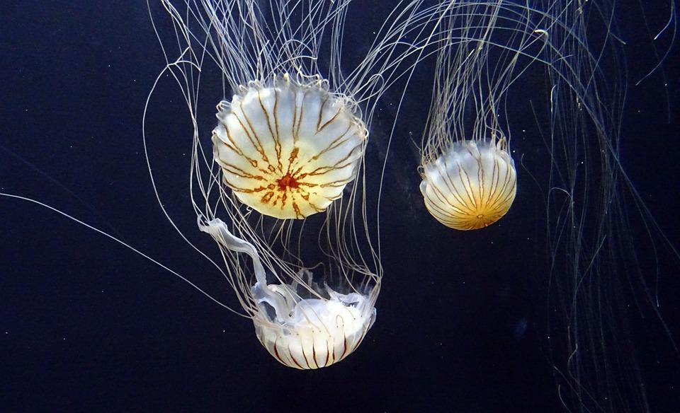 Šta kad vas opeče meduza