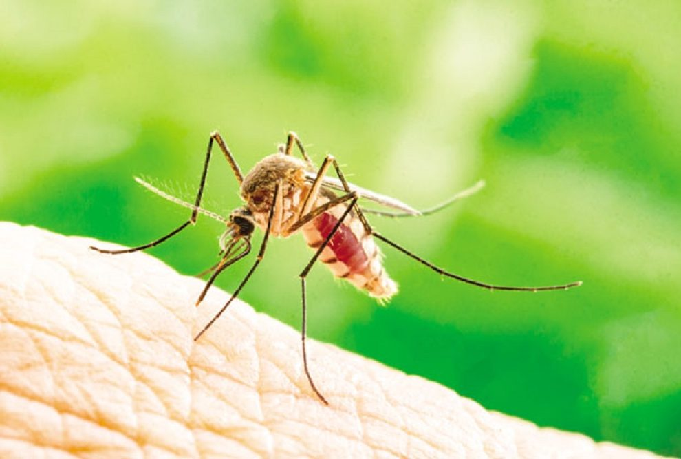 Očekuje se najezda komaraca, biće ih najviše u ovim delovima SRBIJE