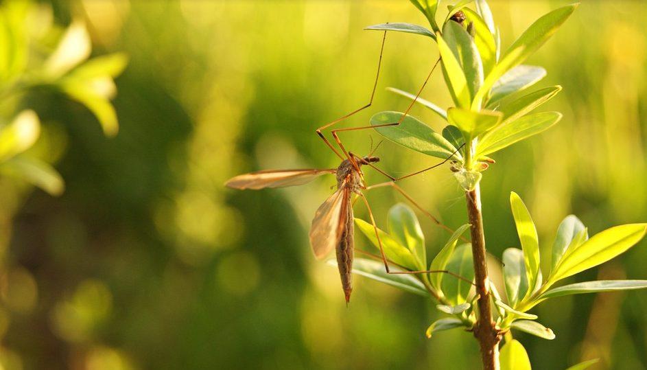 Prirodni sprej protiv komaraca