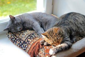 Kako zaštititi macu koja izlazi napolje?ako! Evo kako da OLAKŠATE vašoj mezimici boravak u kući!