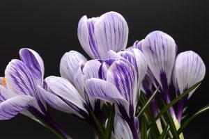 Cveće u naš život privlači sreću, ljubav i novac - Evo šta kaže horoskop, kome koji cvet najbolje pristaje!