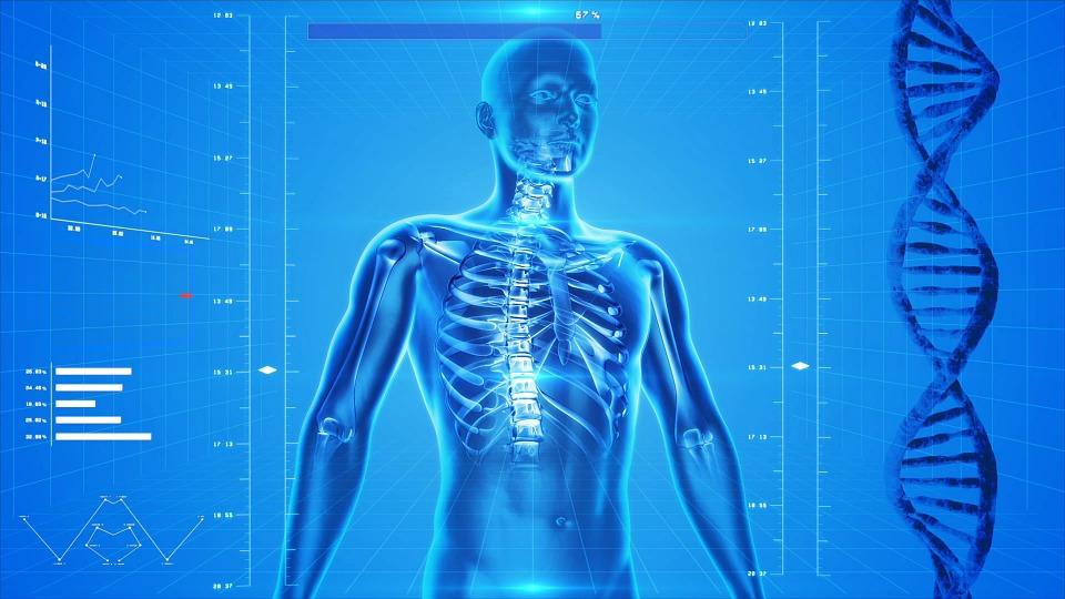 Prvo stare pluća, jetra nam je najdugovečnija