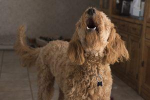 Kako psi reaguju na naše tepanje?