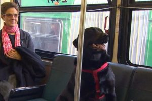 Sve je više pasa u javnom prevozu: Ne jedu beli luk, ne pričaju šta su kupili, ne psuju i ne stavljaju šapu na tuđe sedište